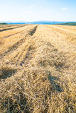 Stubble field Stock Image