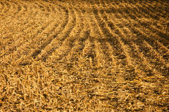 Stubble field background stock images