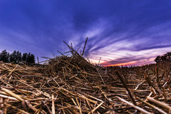 Stubble field and blue hour Royalty Free Stock Images