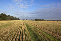 Stubble field and blue sky Stock Photo