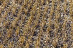 Stubble Field Royalty Free Stock Photography