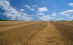 Stubble field and  clouds. Stubble field and stormy clouds background Stock Photos
