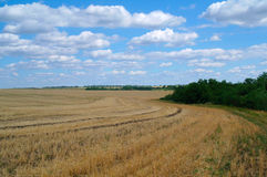 Stubble field and  clouds. Stubble field and stormy clouds background Royalty Free Stock Image