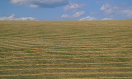 Stubble field and  clouds. Stock Image
