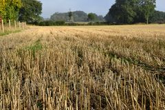 Stubble in field after harvest Royalty Free Stock Photos