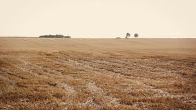 Stubble field after harvest stock video