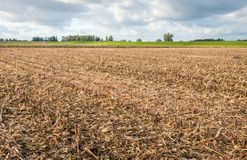 Stubble field after harvesting silage maize. In the foreground a stubble field after harvesting silage maize and in the background a green embankment Royalty Free Stock Images