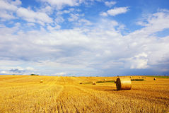 Stubble Field with Hay Bales. Under blue sky Royalty Free Stock Photography