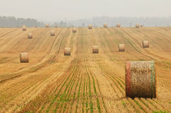 Stubble Field with Hay Bales Royalty Free Stock Photos
