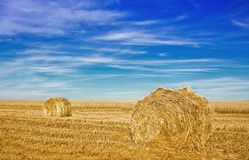 Stubble field with hay rolls Royalty Free Stock Photography
