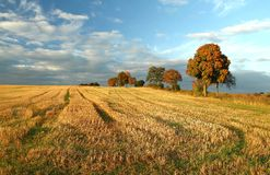 Stubble field Royalty Free Stock Image