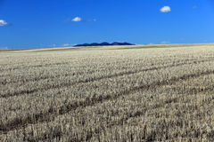 Stubble field and the mountains Royalty Free Stock Photography