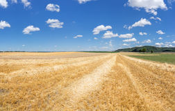 Stubble field with rows of straw Royalty Free Stock Photography