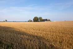 Stubble field by the sea Stock Photography