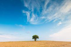 Stubble field with single tree. Stubble field with with single old rowan tree. Beautiful summertime rural landscape photographed in Poland stock photo