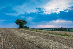 Stubble field with single tree Stock Photos