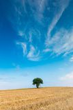 Stubble field with single tree Stock Images