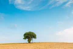 Stubble field with single tree Royalty Free Stock Photos