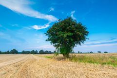 Stubble field with single tree Royalty Free Stock Photo