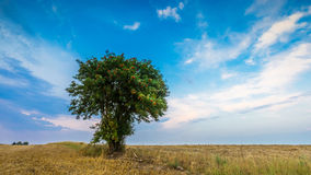 Stubble field with single tree. Stubble field with with single old rowan tree. Beautiful summertime rural landscape photographed in Poland stock photography