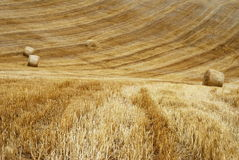 Stubble field and straw bales. Golden stubble field after harvesting corn with bales of straw ready to collect royalty free stock photos
