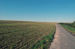 Stubble field with street. Harvested stubble field with small street Stock Images