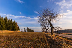 Stubble field and trees Stock Photo