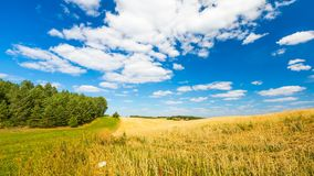 Stubble field under blue sky with white clouds. Summertime landscape. Polish countryside Stock Photos