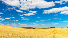 Stubble field under blue sky with white clouds. Summertime landscape. Polish countryside Royalty Free Stock Image