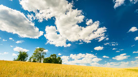 Stubble field under blue sky with white clouds. Summertime landscape. Polish countryside Royalty Free Stock Photography