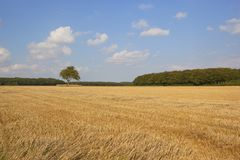 Stubble field and woodland Royalty Free Stock Photos
