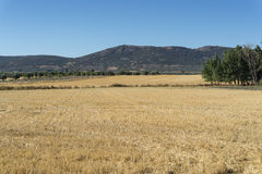 Stubble fields in an agricultural landscape Stock Images