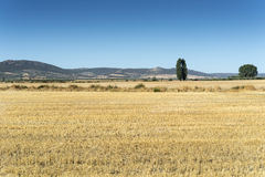 Stubble fields in an agricultural landscape. In Ciudad Real Province, Spain royalty free stock photography