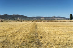Stubble fields in an agricultural landscape Stock Image