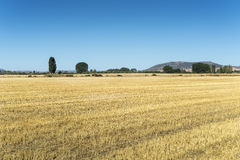 Stubble fields in an agricultural landscape Stock Photography