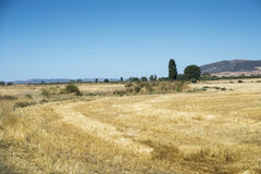 Stubble fields in an agricultural landscape Royalty Free Stock Image
