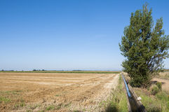 Stubble fields and poplar groves Royalty Free Stock Image