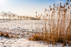 Dutch rural landscape in winter Royalty Free Stock Photo