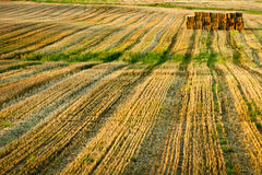 Stubble after harvest royalty free stock photography