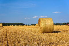 Stubble after harvest in Greater Poland Stock Image
