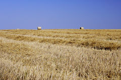 Stubble after harvest Stock Image