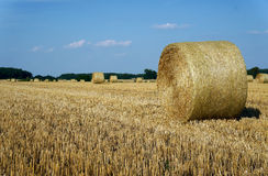Stubble after harvest Royalty Free Stock Image
