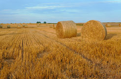 Stubble after harvest, Stock Photo