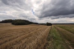 Stubble near woods before the storm. In sommer Royalty Free Stock Image