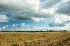 Stubble no campo e nas nuvens no céu fotografia de stock