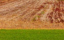 Stubble o campo de milho em uma inclinação de um monte no outono fotografia de stock