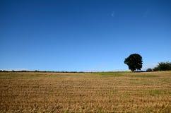Stubble unter einem blauen Himmel lizenzfreie stockfotografie