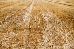 Stubble of wheat Stock Photos