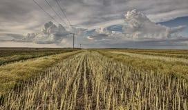 Stubblefält och Prarie storm arkivfoto