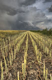 Stubblefält och Prarie storm Royaltyfria Bilder